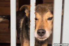 Misio- cudowny pies, którego każdy omija :(