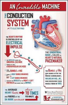 What makes the heart beat? Learn about the conduction system, an incredible machine.