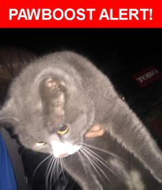 Is this your lost pet? Found in Liberty Center, OH 43532. Please spread the word so we can find the owner!  Vey friendly grey and white cat. Appears to be a neutered male. Showed up may 1  Nearest Address: Near US Rte 24 & Co Rd 3