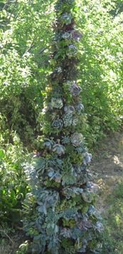 "Sedum Topiary Tree Invert a tomato cage in a pot, cover it with chicken wire, then fill with spaghnum moss on the outside, peat moss inside. Poke in Sedums & other succulents. You created a TOPIARY TREE covered with ""roses"". Unique Gardens, Amazing Gardens, Beautiful Gardens, Dream Garden, Garden Art, Garden Plants, Cacti And Succulents, Planting Succulents, Succulent Tree"