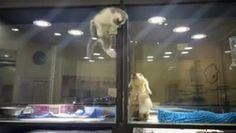 Kitten Climbs Pet St
