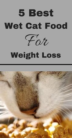 5 Best Wet Cat Food For Weight Loss If you own a cat there is a good chance your friend may be overweight. CBS quoted an Association for Pet Obesity P Diet Cat Food, Healthy Cat Food, Cat Diet, Food Food, Healthy Recipes, Owning A Cat, Cat Health, Best Diets, Loosing Weight