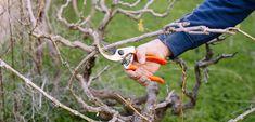 Πότε και πώς γίνεται το κλάδεμα του αμπελιού   Τα Μυστικά του Κήπου Parrot, Gardening, Animals, Parrot Bird, Animales, Animaux, Lawn And Garden, Animal, Animais