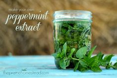 How to Make Homemade Mint Extract (recipe)