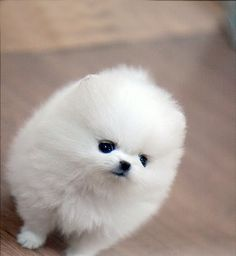 AWWWW LOOK AT THE FLUFFY PUPPY!