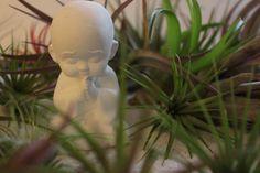 Tillandsia Zen Garden & Little Monk