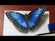 How to Draw a Realistic Butterfly - YouTube