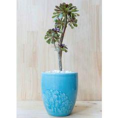 Matera Esmeralda con planta natural by Habibi   $100.000 COP