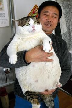 i feel like this is how my cats going to look in a year or two... shes well on her way!