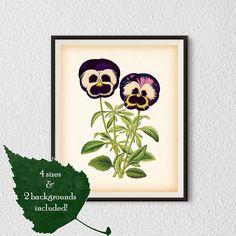 Pansy Antique print Botanical print от RestoredBotanicalArt