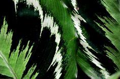 Tropical foliage fort worth texas botanic garden conservatory humidity
