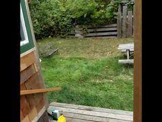 ❝ La cortesía gana: un canadiense educado persuade a una familia de osos para que abandone su patio ❞ ↪ Vía: proZesa
