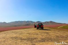 Desierto Florido Atacama Chile