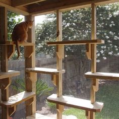 catio or a patio for your cat #CoolForCats #CatIdeas #CatFurniture
