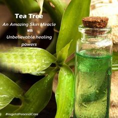 Do you know?   Tea Tree is an amazing skin miracle of Australia which is widely used in natural #skincare products because of its unbelievable healing powers. #VegetalPersonalCare
