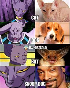When your Beerus. Dbz Memes, Funny Naruto Memes, Funny Relatable Memes, Dbz Manga, Funny Dragon, Funny Animal Memes, Ranger, Super Funny, Dragon Ball Z