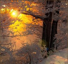 Sunshine peering through snow covered trees in the woods...