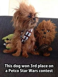 Chewy?