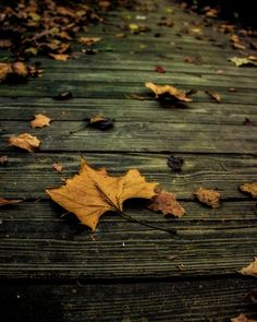 Nature Photography Autumn Leaf Print Nature Photo by HausofAriella, $12.00