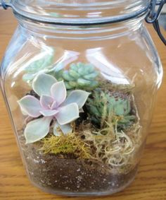 DIY terrarium directions with goodwill jar, succulent cuttings, charcoal, soil, rocks, and moss. Pretty cute.