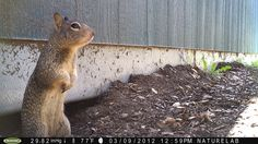 Loving this critter cam from Natural History Museum in LA!  California Ground Squirrel Outside Den by The Natural History Museum of Los Angeles County, via Flickr