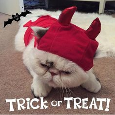 Happy #Halloween  #halloweencat #t Halloween Cat, Happy Halloween, Lou Instagram, Trick Or Treat, Winter Hats, Animals, Animales, Animaux, Animal
