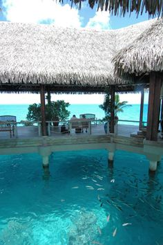 """""""This is the Hilton Moorea, in Tahiti feed these nocturnal sharks in this little spot by bar area at night!! SUCH an amazingly beautiful place"""""""