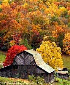 old barn among gorgeous fall foliage Country Barns, Old Barns, Country Life, Country Living, Country Roads, Autumn Scenery, Autumn Trees, Autumn Fall, Autumn Nature