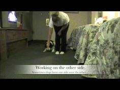 Dog Trick, How to train Crawling: Pam's Dog Academy www.pamsdogtraining.com Pamela Johnson, San Diego CA Dog Tricks and Dog Training too!