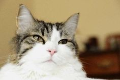 Since Oscar was adopted by nursing home as a kitten, he has accurately predicted the deaths of more than 50 residents.