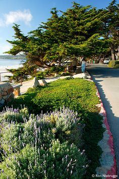Carmel By the Sea, Monterey Peninsula, California