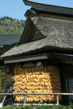 Japanese Thatched Roof with wall of corn.