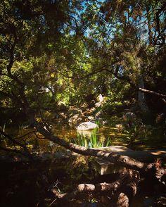 Devil's bridge and pond #japanesegarden #garden #gardenersnotebook #landscape #design #storrierstearnsjapanesegarden #storrierstearns #nature #outdoors