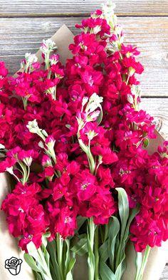 Lovely arrangement of pinks & white.