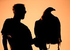 Falknerei als Weltkulturerbe - Adlerarena LandskronFalknerei ist in erster Linie die Beizjagd mit dem Greifvogel. Aber zur Falknerei zählen auch, die Greifvogelzucht und der Greifvogelschutz. Die Falknerei ist von der UNESCO als Immaterielles Kulturerbe der Menschheit anerkannt worden. Abu Dhabi, Silhouette, Heritage Site, Mongolia, United Arab Emirates, Villach, Czech Republic, Silhouettes