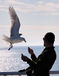 """I'm sure a lot of you are familiar with the term """"seagull manager"""". If you're not, think about a manager whose behavior is to fly in, make a lot of noise, dump on everyone, and then fly away. Eddie Rickenbacker, Beautiful Stories, Old Men, Thought Provoking, Make Me Smile, Sick, Target, Management, Vacation"""