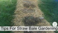 Straw Bale Trädgårds Instruktioner