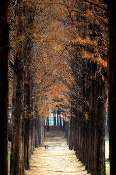 Tree tunnel, Everland, South Korea