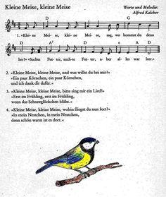 Kleine Meise #lied #kindergarten #kita #musik #musikalischeerziehung #kinderlied