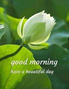 Good Morning Flowers Gif, Good Morning Beautiful Pictures, Good Morning Beautiful Images, Good Morning Images Hd, Good Morning Picture, Morning Pictures, Have A Beautiful Day, Good Morning Wednesday, Good Morning Happy Sunday