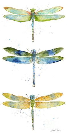 Dragonfly Bliss-jp3443 by Jean Plout