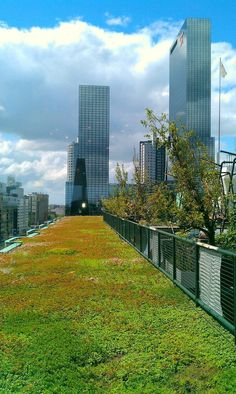 This is a Rotterdam green roof. Green roofing is a new method to encourage and live more sustainably in urban areas. The environmental benefits of installing a green roof translate through carbon sequestration, a cooling effect, and potentially local food Green Architecture, Landscape Architecture, Landscape Design, Garden Design, Sustainable Architecture, Sustainable Design, Rotterdam, Green Roof System, Living Roofs
