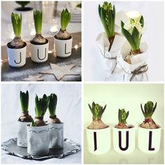 HYACINTHS - maybe for christmas? :-)