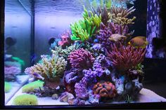 Attention to details is what can make the difference between a nice reef tank, and a great reef tank. In this exquisite example of a reef display by Masana
