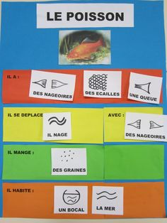 poisson petite section - Recherche Google Petite Section, Science, Sea And Ocean, Preschool Kindergarten, Goldfish, Marine Life, Kids Learning, Activities, Education