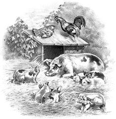 vintage farm graphic - Google Search