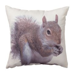 Photographic squirrel cushion from Transomnia