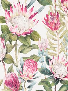 The majestic flowerheads of the King Protea plant have been faithfully interpreted and recoloured to create this stunning statement wallpaper. Botanical Wallpaper, Flower Wallpaper, Botanical Art, Protea Art, Protea Flower, Vintage Flower Prints, Vintage Flowers, King Protea, Australian Native Flowers