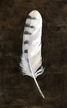 Snowy Owl feather watercolor