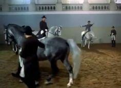 Inside The Spanish Riding School of Vienna - Video Spanish Riding School, Horse World, News Media, Learning Spanish, Dressage, Vienna, Equestrian, Horses, Sunday